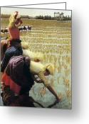 Flooded Greeting Cards - An Italian Rice Field Greeting Card by Angelo Morbelli