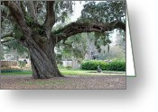 Live Art Greeting Cards - Ancient Live Oak Greeting Card by Suzanne Gaff