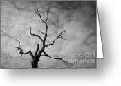 White Greeting Cards - Ancient Oak Tree No. 3 Greeting Card by Dave Gordon