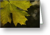 Fall Leaves Photo Greeting Cards - And So It Begins Greeting Card by Rebecca Cozart
