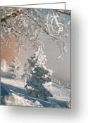 Greeting Card Greeting Cards - And the Hoarfrost Came Greeting Card by Shirley Sirois