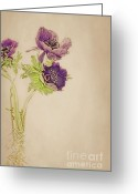 Anemone  Greeting Cards - Anemones painting Greeting Card by Kristin Kreet