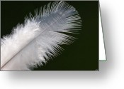White Feather Greeting Cards - Angel feather Greeting Card by Carol Lynch