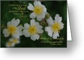 Robyn Stacey Photo Greeting Cards - Angel Mother Texas Wild Rose Greeting Card by Robyn Stacey