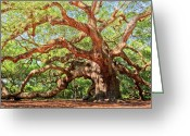 Tree Greeting Cards - Angel Oak - Charleston SC  Greeting Card by Drew Castelhano