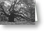 Angel Oak Tree Greeting Cards - Angel Oak II - Black and White Greeting Card by Suzanne Gaff
