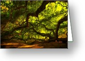 Old Tree Greeting Cards - Angel Oak Limbs 2 Greeting Card by Susanne Van Hulst