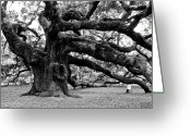 Old Tree Greeting Cards - Angel Oak Tree 2009 Black and White Greeting Card by Louis Dallara