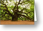 Landscape Photographs Greeting Cards - Angel Oak Tree 2009 Greeting Card by Louis Dallara