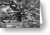 Oak Tree Greeting Cards - Angel Oak Tree Black and White Greeting Card by Melanie Snipes