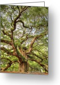 Angel Oak Tree Greeting Cards - Angel Oak Tree Johns Island SC Greeting Card by Dustin K Ryan