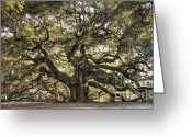 Angel Oak Tree Greeting Cards - Angel Oak Tree Live Oak  Greeting Card by Dustin K Ryan