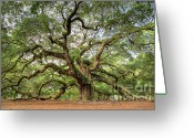Huge Greeting Cards - Angel Oak Tree of Life Greeting Card by Dustin K Ryan