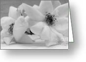 Poster From Greeting Cards - Angel Roses Greeting Card by Marsha Heiken