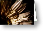 Decor Floral Picture Cards Greeting Cards - Angel Wings Greeting Card by Marsha Heiken