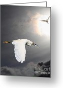 Migrating Bird Greeting Cards - Angels of The Night Sky Greeting Card by Wingsdomain Art and Photography