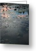Lilly Pad Greeting Cards - Angkor pond Greeting Card by Jason Irish