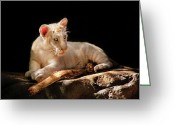 Black Leopard Greeting Cards - Animal - Cat - A baby snow Tiger Greeting Card by Mike Savad