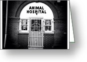 Blackandwhite Greeting Cards - Animal Hospital Greeting Card by Natasha Marco