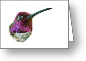 Iridescent Greeting Cards - Annas Hummingbird Greeting Card by Logan Parsons