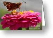 Insects Greeting Cards - Another day Another Flower Greeting Card by John From CNY