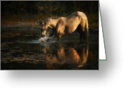 Ron Mcginnis Photography Greeting Cards - Another Morning at the Pond Greeting Card by Ron  McGinnis