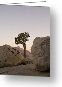 Steady Greeting Cards - Ansel Adam Tree, Rocks, Tuolumne Greeting Card by Dawn Kish