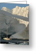 Antarctica Greeting Cards - Antarctic No. 7 Greeting Card by Joe Bonita