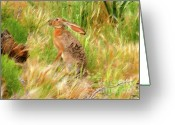 Jackrabbit Greeting Cards - Antelope Jackrabbit Greeting Card by David Lee Thompson