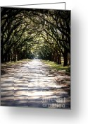 Tree-lined Greeting Cards - Anticipation Greeting Card by Carol Groenen