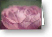 Texture Flower Photo Greeting Cards - Antique Pink Greeting Card by Aimelle