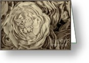 Flower Greeting Card Greeting Cards - Antique Ranunculus Greeting Card by Joan Carroll