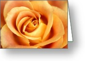 Featured Artwork Prints Greeting Cards - Antique Rose Greeting Card by Kathy Yates