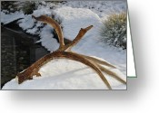 Shed Greeting Cards - Antler 2 Greeting Card by Heather Giltner