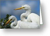 Christopher Holmes Photography Greeting Cards - Anxiously Waiting Greeting Card by Christopher Holmes