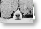 Black And White Animal Greeting Cards - Anyone Out There? Greeting Card by By Jake P Johnson