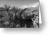 Desert Landscapes Greeting Cards - Anza-Borrego Yuccas Greeting Card by Peter Tellone