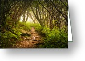 Woods  Greeting Cards - Appalachian Hiking Trail - Blue Ridge Mountains Forest Fog Nature Landscape Greeting Card by Dave Allen