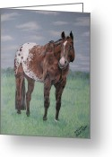 Melita Safran Greeting Cards - Appaloosa Greeting Card by Melita Safran