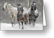Blizzard Greeting Cards - Appaloosa Winter Greeting Card by Wade Aiken