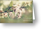Blossom Greeting Cards - Apple blossom branch in early spring Greeting Card by Sandra Cunningham