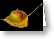 Striking Photography Greeting Cards - Apple Harvest Autumn Leaf Greeting Card by James Bo Insogna