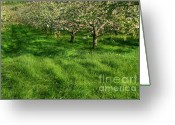 Farm Digital Art Greeting Cards - Apple orchard Greeting Card by Sandra Cunningham