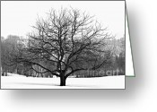 Snowing Greeting Cards - Apple tree in winter Greeting Card by Elena Elisseeva