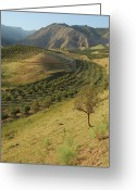 Clear Photo Greeting Cards - Apple Tree Orchard Like River In  Mountain Greeting Card by Bernard Grua