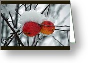 Snowy Tree Greeting Cards - Apples 1 2 3 Greeting Card by Gwyn Newcombe