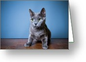 Blue Cat Greeting Cards - Apprehension Greeting Card by Square Dog Photography