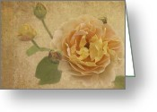 Texture Flower Photo Greeting Cards - Apricot Bliss Greeting Card by Diane Schuster