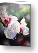 Apricot Painting Greeting Cards - Apricot Flowers Greeting Card by Irina Sztukowski