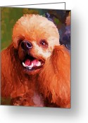 Poodle Greeting Cards - Apricot Poodle Greeting Card by Jai Johnson